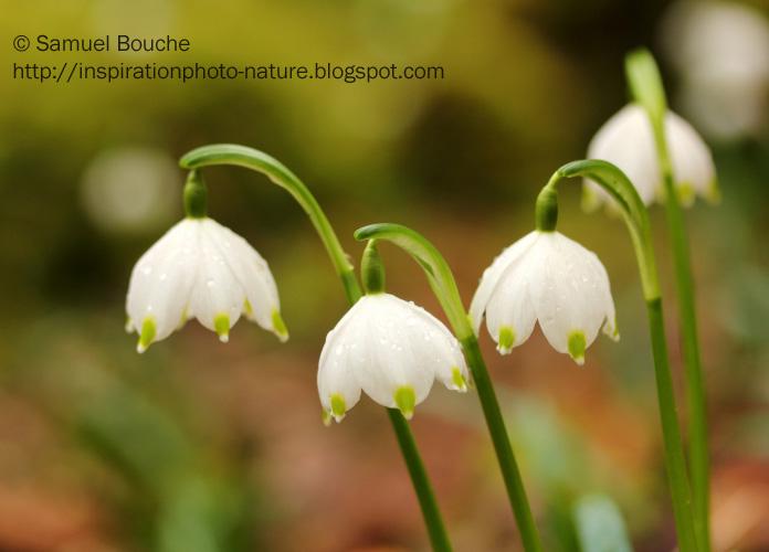 fleurs blanches dans les bois