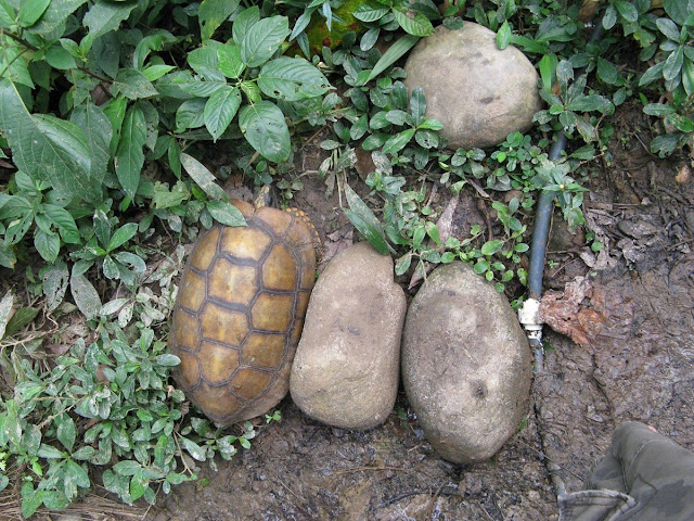 funny animals, animal pictures, tortoise and rocks