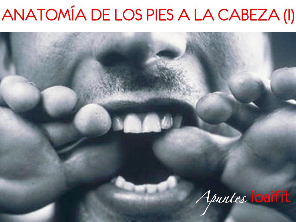 ANATOMIÍA DE LOS PIES A LA CABEZA (I) - El pie | Educación Funcional ...