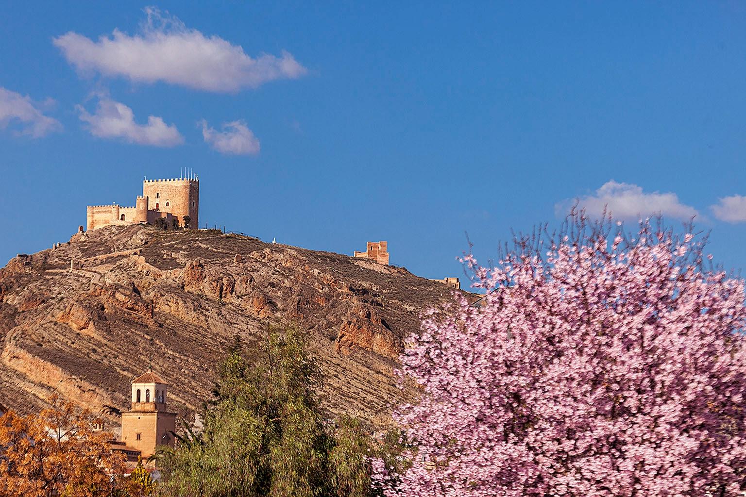 Castillo, Jumilla, Floración