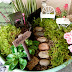 Life Unexpected: No Maintenance Fairy Garden