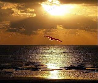 Pássaro voando sobre o mar
