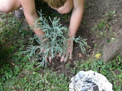 Πως να γίνεις κηπουρός