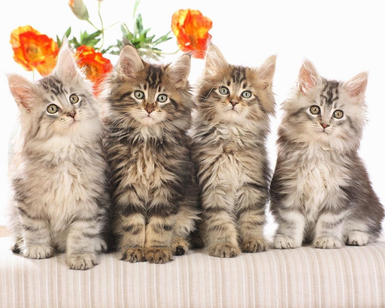 Facebook italia foto gatti divertenti per timeline for Gatti sfondi desktop gratis