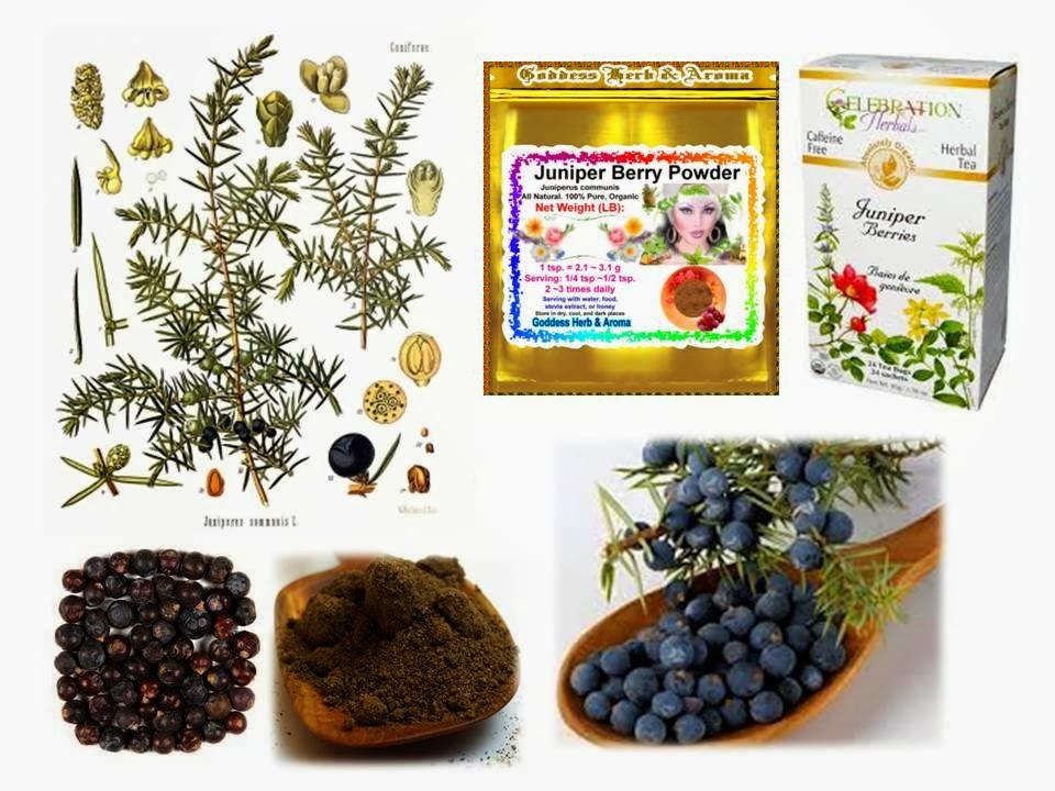 Juniper berries side effects