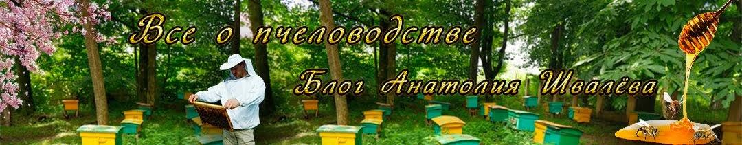 Всё о пчеловодстве блог  Анатолия Швалёва