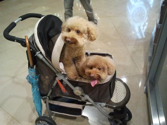 La vida en taipei los taiwaneses y sus mascotas for Carritos para perros