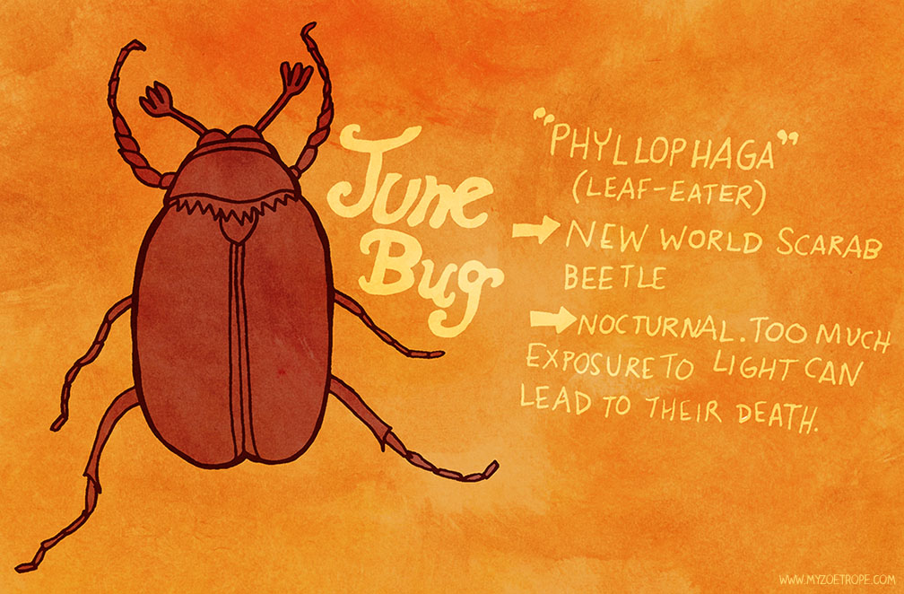June Bug Drawing 139 June Bug
