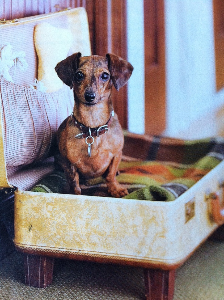 This puppy in a vintage suitcase is adorable.