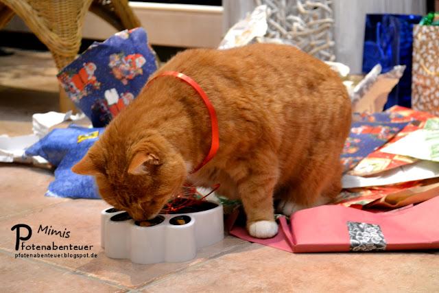 Katze Mimi testet an Weihnachten ihren neuen Futternapf
