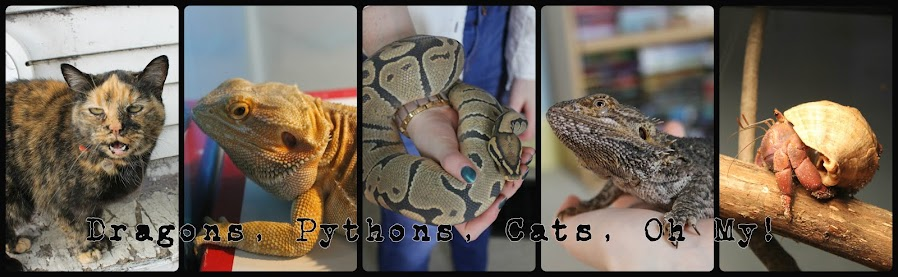 Dragons, Pythons, Cats, Oh My!