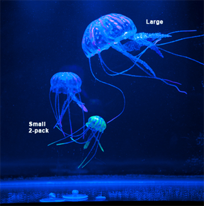 Oregon invasive species freshwater jellyfish tropical for Can i have a jellyfish as a pet