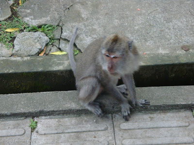 Ubud Monkey Forest Bali Photo 1