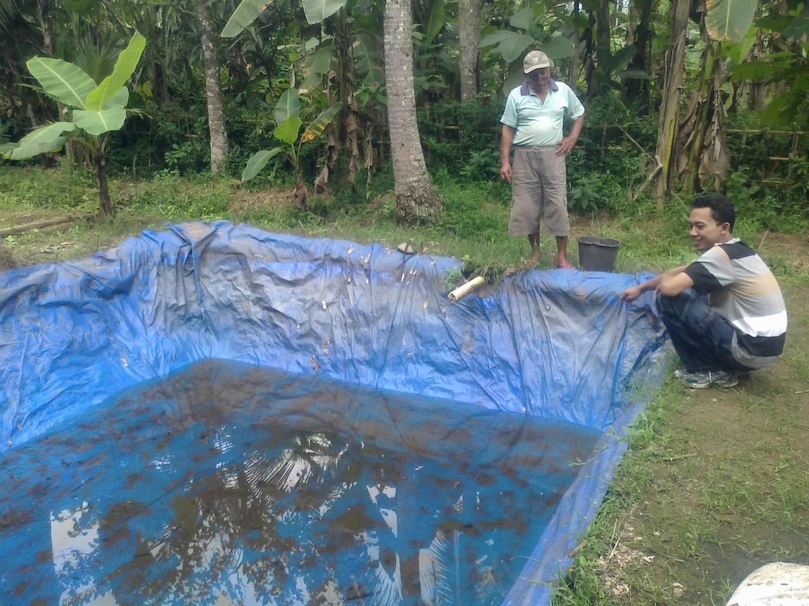 kolam terpal budidaya lele