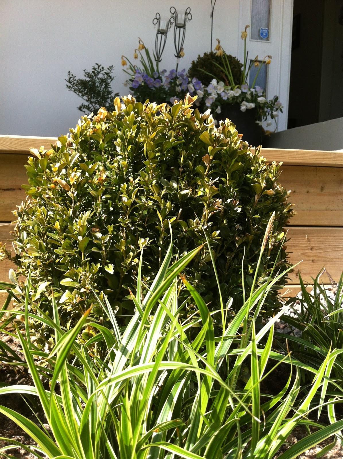 Njut i din trädgård: små steg räknas också!