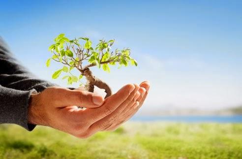 Maintaining a Green Environment.
