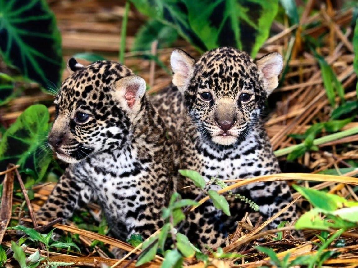 Photos Jaguar