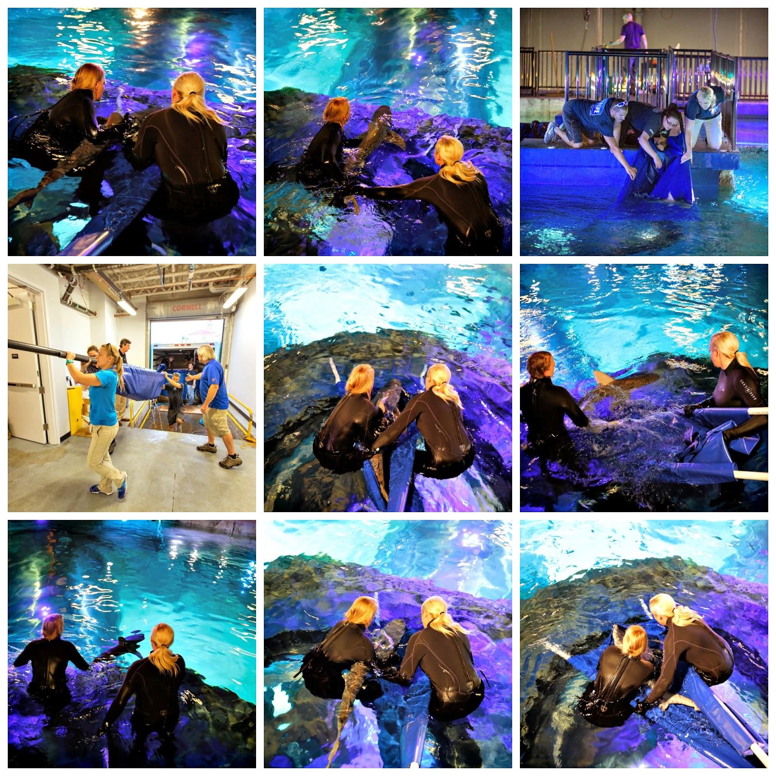 Candoitmom Blog Magnificent Sharks Sea Life Orlando