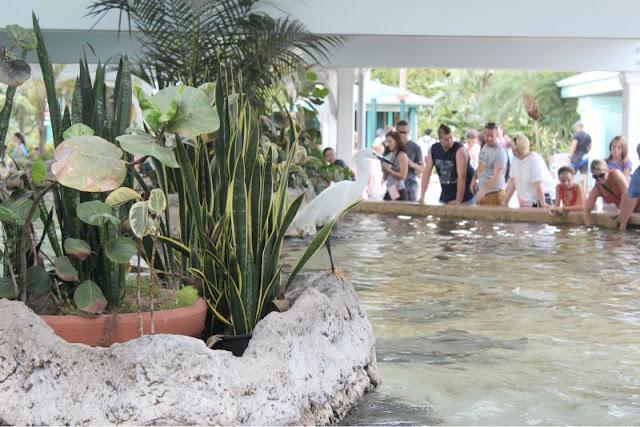 Sea World Orlando Florida