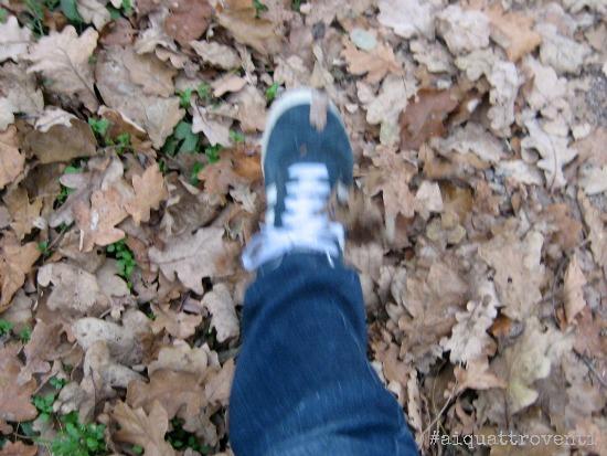 aiquattroventi-autunno-calciallefoglie