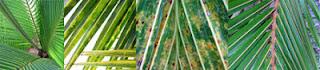 Palm Tree Leaf Textures at www.milliande-printables.com