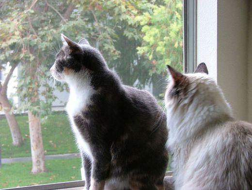 Tenere il gatto in casa o fuori? - Pets Life