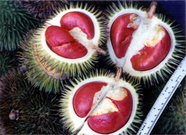 Durian Yang Berwarna Merah Dan Berbentuk Jantung