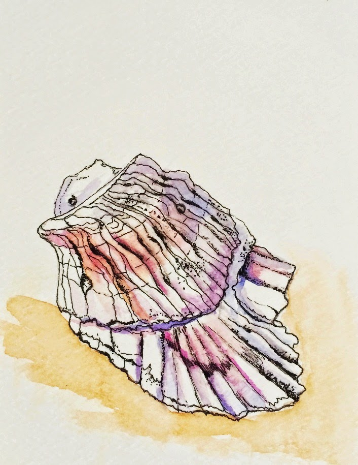 watercolor painting of a shell