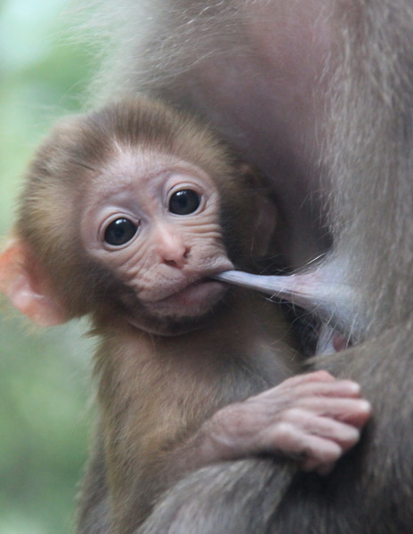 images of cute baby monkeys - photo #4