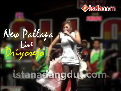 new pallapa, palapa, om palapa, new pallapa live driyorejo 2013, mp3 cover new pallapa