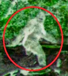 Bigfoot Cloaking