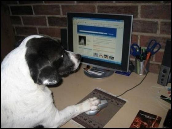 imagens fofas e engraçadas com cachorros no computador