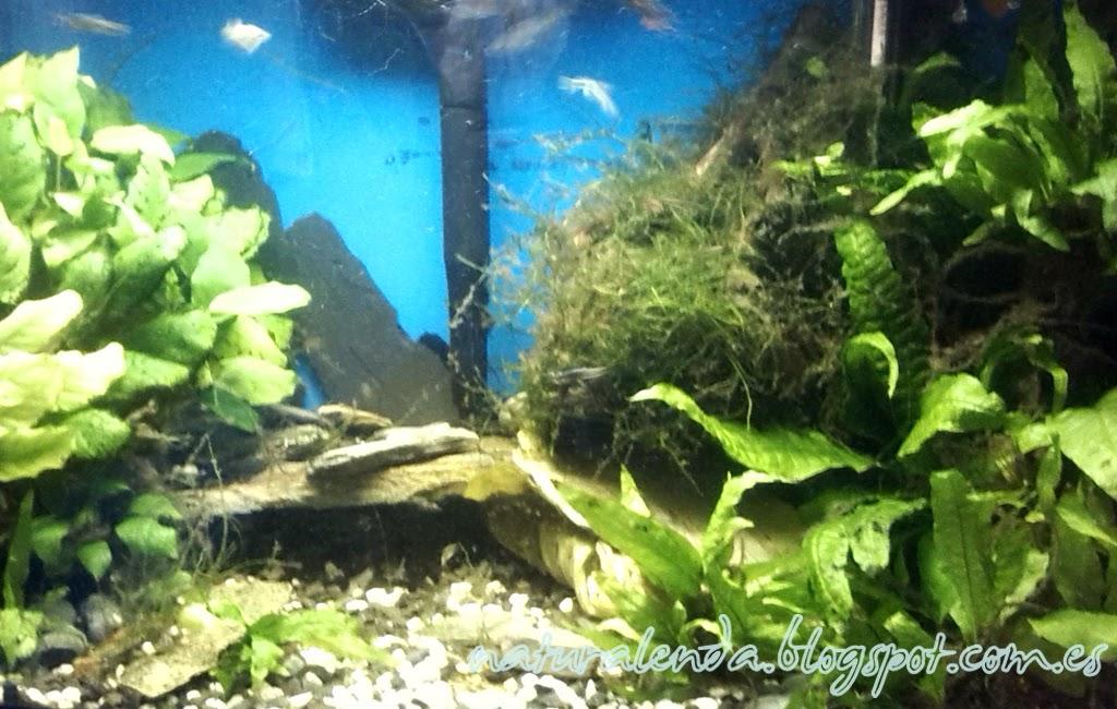 acuario de 40 litros