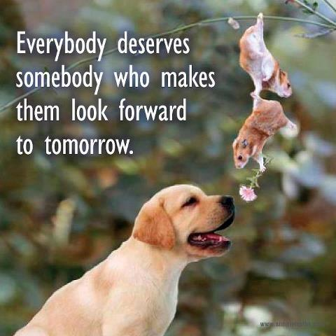 Image result for baby animals pic quote