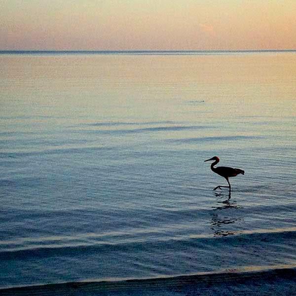 Observando a la garza que camina por la playa  pienso en lo triste que es que, quizá un día,  los árboles donde tiene su nido podrían ser  arrancados para hacer un campo de golf en el  que unos ricos jugarían a meter pelotitas.