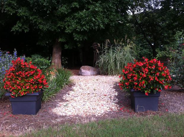 garden hastings begonias