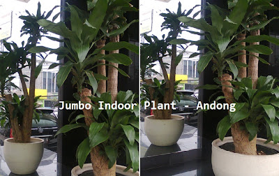 Jumbo Sized Indoor Plant