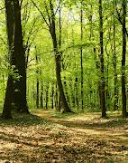 Las przyciąga soczystą zielenią: (las)
