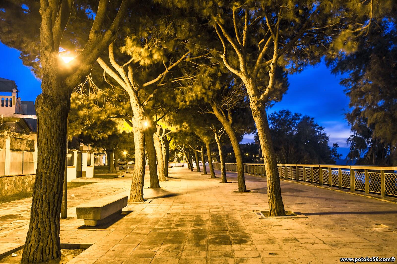 Paseo del Chorrillo con su arboleda Rota