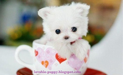 Lovable Puppy Pictures