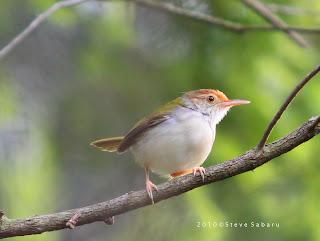 http://1.bp.blogspot.com/-AmVNr8KGf2k/TywdkPB_SqI/AAAAAAAAAD0/MaACHCFqBPU/s1600/burung+lincah.jpg