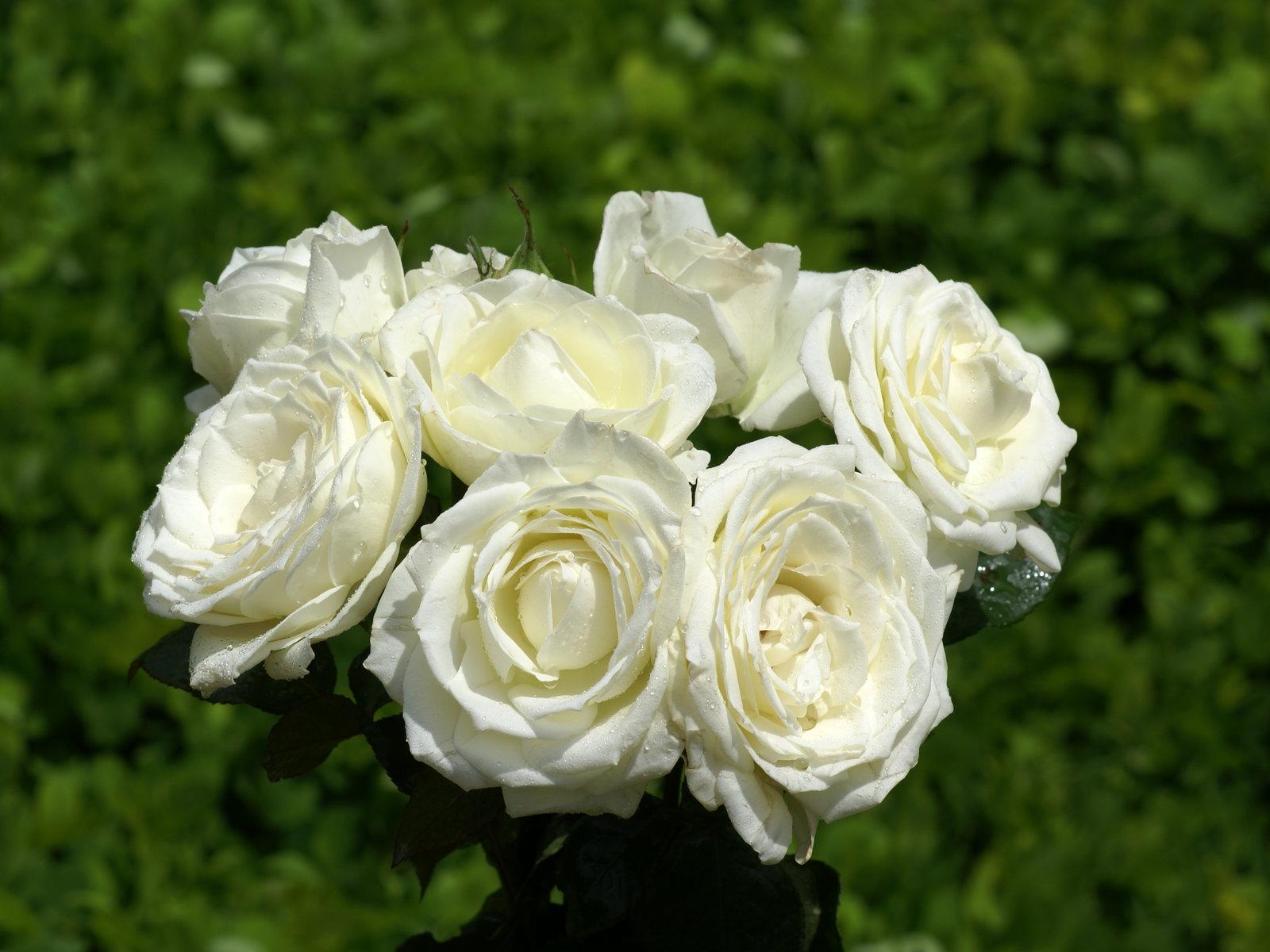 Las flores de tu boda: simbología y significado Innovias - Fotos De Ramos Flores Blancas