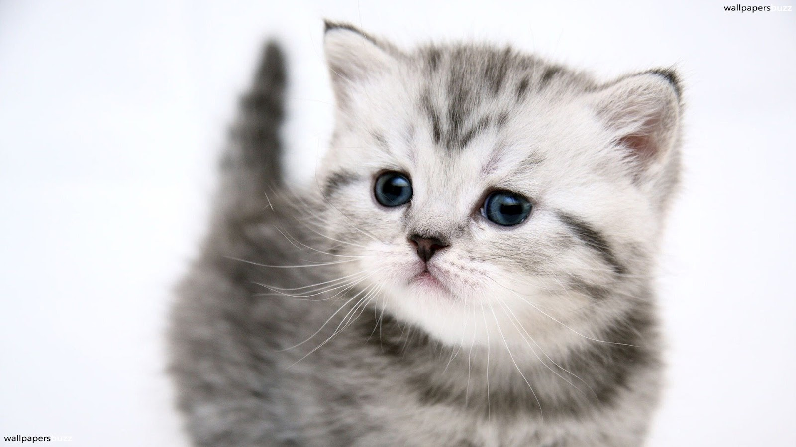 http://1.bp.blogspot.com/-Ama_t1gn2MA/T8gxpIRUJXI/AAAAAAAAA2Y/vOM6krExFug/s1600/cat-wallpaper-2.jpg
