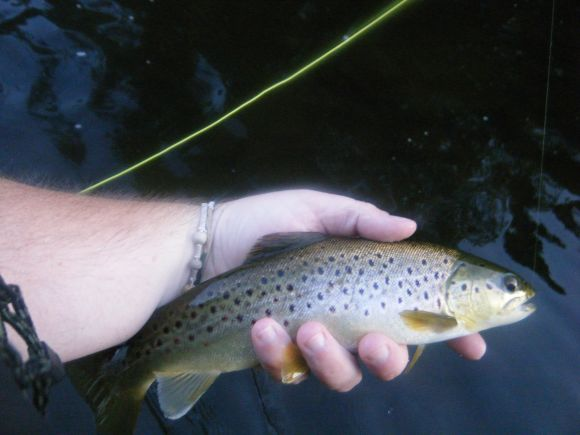 Heart of fly fishing country roscoe new york for Roscoe ny fishing