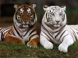 imagenes de animales en peligro de extincion con sus nombres - principales animales en peligro de extincion en el estado de