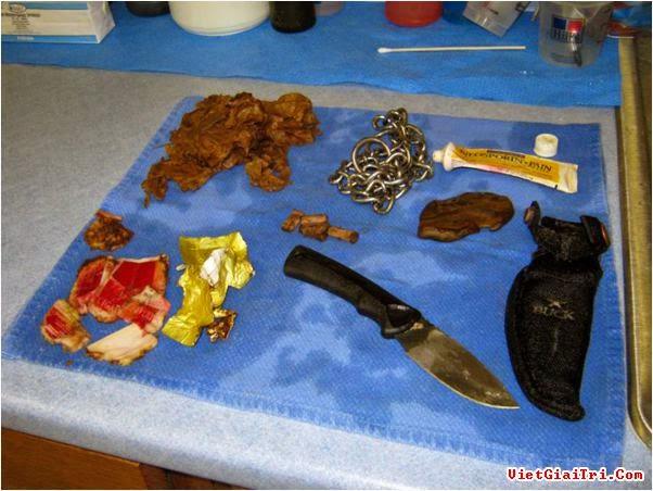 Những đồ vật như dao, gói thuốc lá, một sợi xích được lấy ra từ bụng một con chó pit bull 2 tuổi. Ảnh: Caters