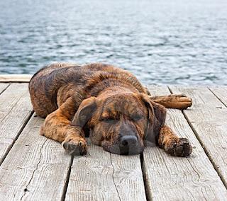 Plott Puppy Pictures