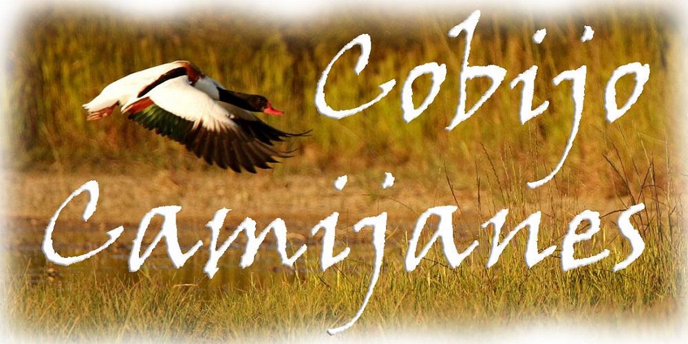 Cobijo Camijanes