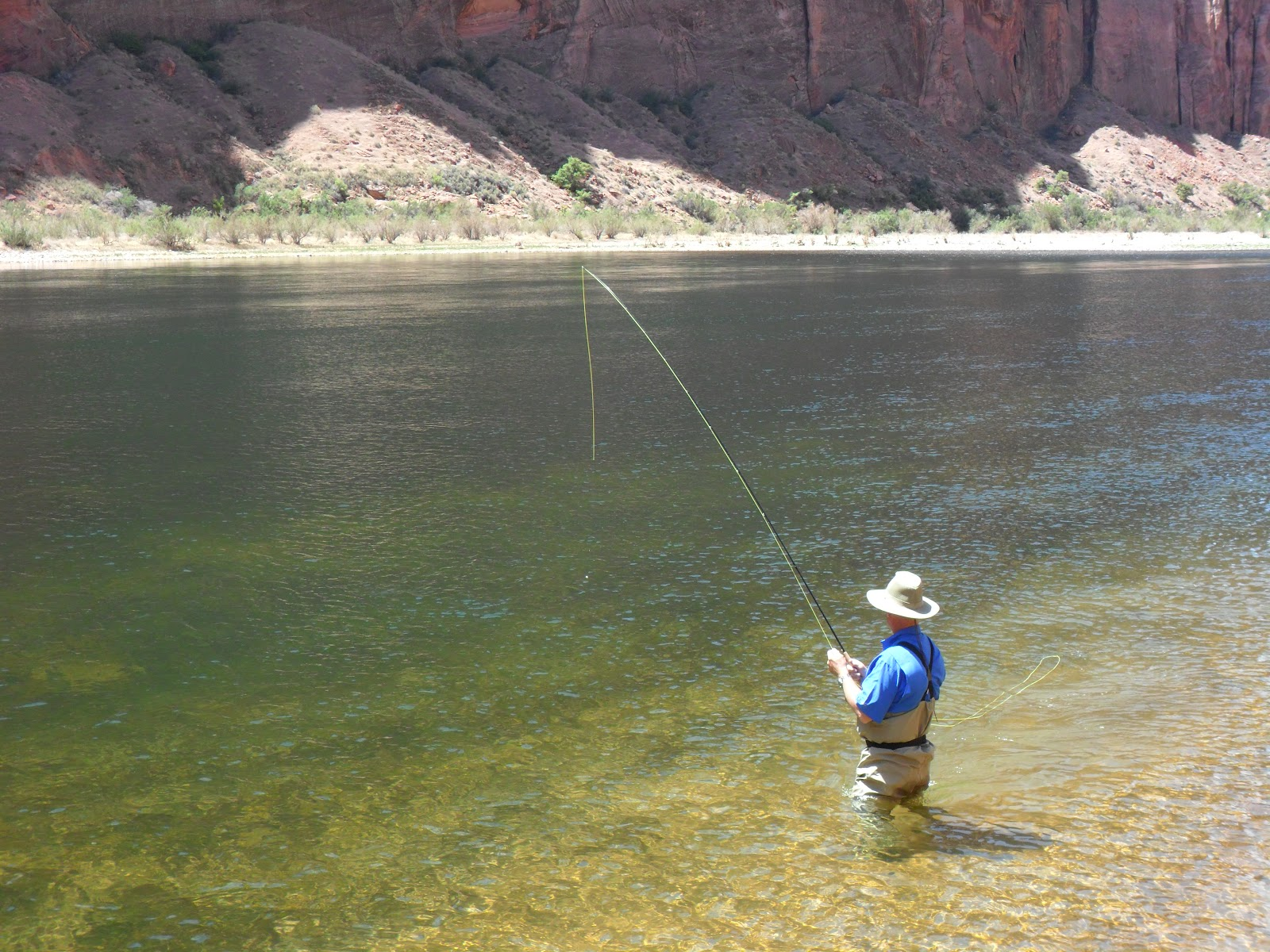 Lees ferry fishing report lees ferry az may 4 more good for Lees ferry fishing report