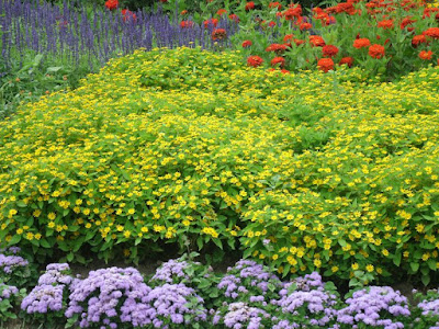 James Garden mass of orange zinnias, yellow rudbeckia, purple salvia, lavender ageratum by garden muses: a Toronto gardening blog